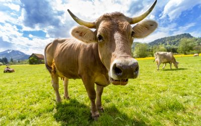 Why photos of cows won't sell your products